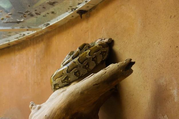 Een python in een kooi in de dierentuin