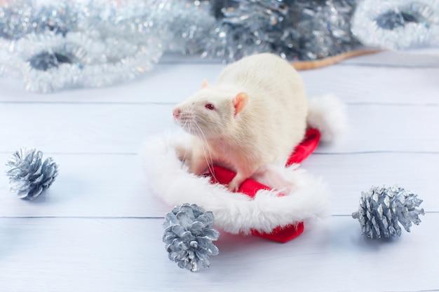 Een rat in een kerstmuts, symbool van het jaar 2020