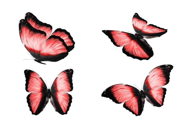 Een reeks gekleurde vlinders is geïsoleerd op een witte achtergrond. tropische motten. vliegende insecten. hoge kwaliteit foto