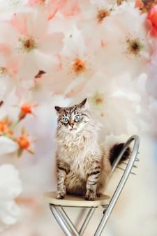 Een respectabele kat zit op een stoel tegen de achtergrond van een muur met grote bloemen