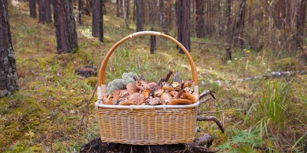 Een rieten mand met bospaddestoelen staat op een stronk omgeven door mos en bostakken