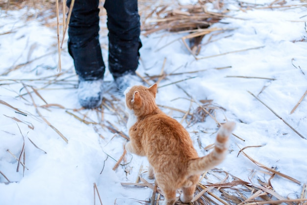 Een rode kat ging naar buiten voor een wandeling op een winterse dag.