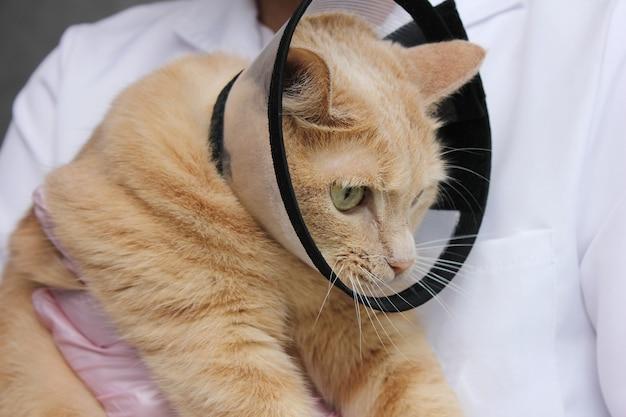 Een rode kat in een beschermende kraag. onderzoek en behandeling van huisdieren. het concept van medicijnen voor huisdieren.