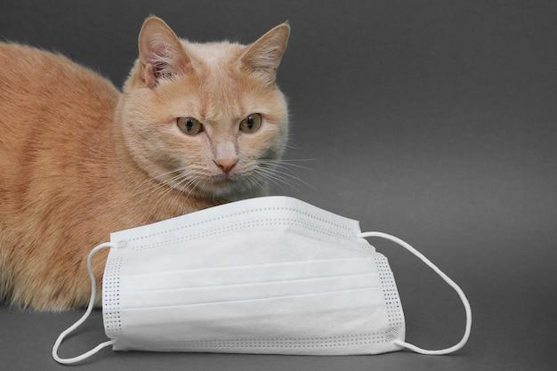Een rode kat ligt dichtbij een gezichtsmasker. concept van veterinaire diensten.