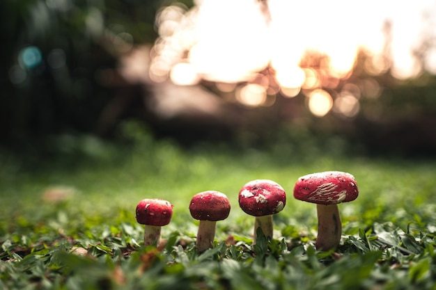 Een rode paddenstoel die op het gras groeit