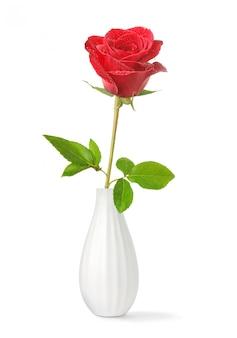 Een rode roos in een vaas op wit wordt geïsoleerd