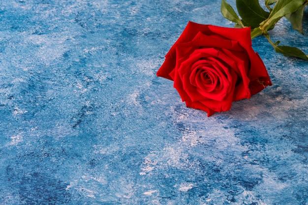 Een rode roos op blauwe acrylverfachtergrond