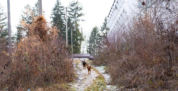 Een roedel honden kijkt aandachtig naar een vreemdeling