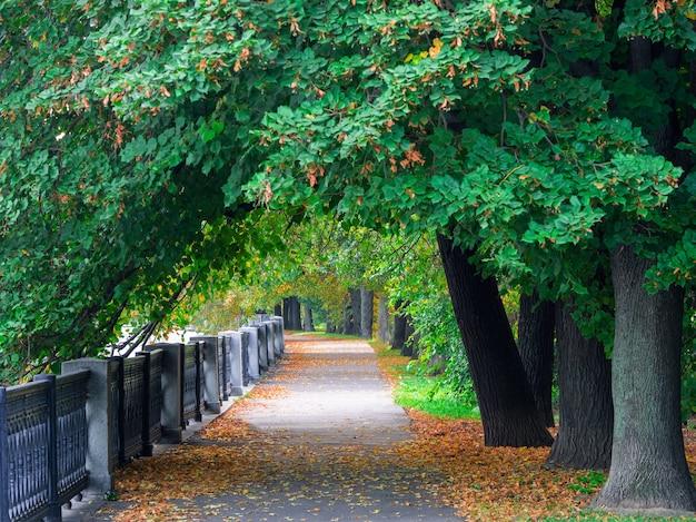 Een rond fragment van de dijk van de stadsrivier met een grote boomtak in de herfst.