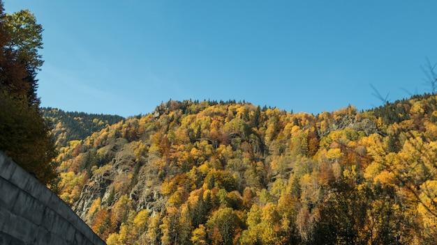 Een rotsachtige heuvel en bos