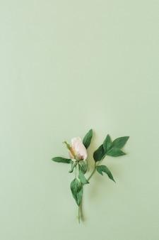 Een roze roze bloem op groen. plat lag, bovenaanzicht minimale bloemensamenstelling.