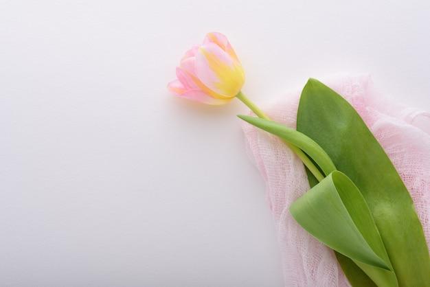 Een roze tulp op roze stof op een witte achtergrond met kopie ruimte