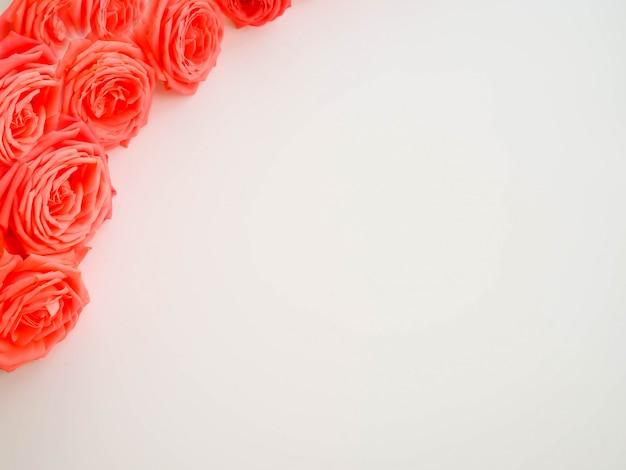 Een scala aan kleuren, selectieve focus, roos