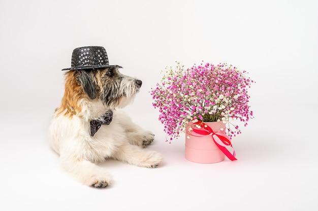 Een schattig jack russell terrier gebroken puppy met stropdas en hoed zit naast een boeket van roze bloemen op een witte achtergrond. dame en heer.