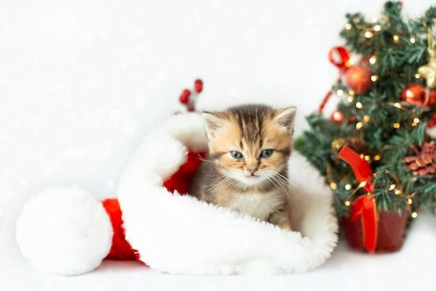 Een schattig katje in een kerstmuts