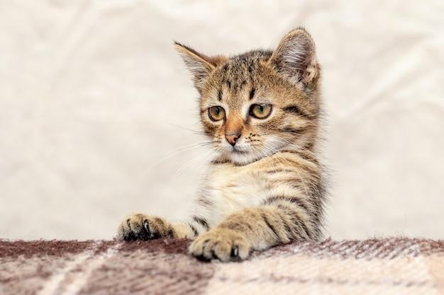 Een schattig klein katje kijkt uit de tafel, een katje met een nieuwsgierige blik