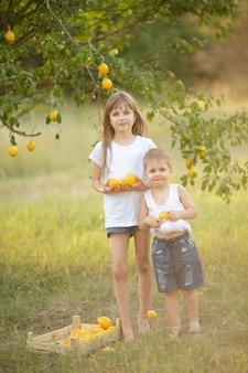 Een schattig meisje en jongen met blond haar in een wit t-shirt met zomercitroenen in de tuin onder een boom