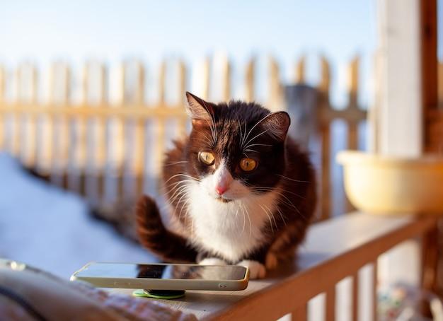 Een schattig pluizig en bruin katje zit in de winter op een houten hek