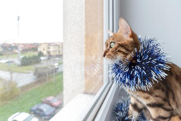 Een schattige bengaalse kat in kerstklatergoud kijkt nieuwsgierig uit het raam.