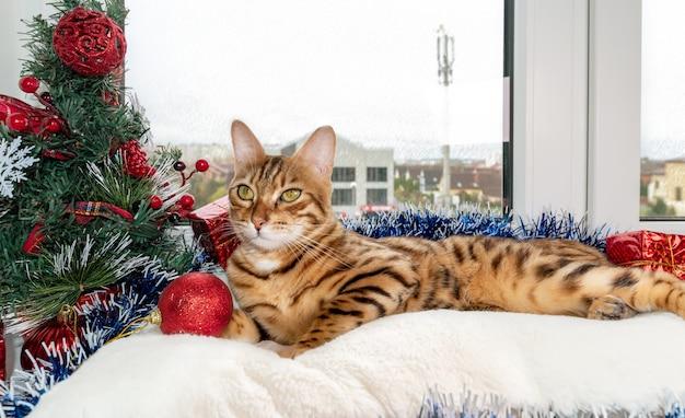Een schattige bengaalse kat ligt op de vensterbank bij de kerstboomversieringen.