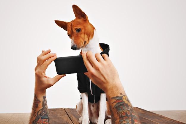 Een schattige bruine en witte hond houdt zijn hoofd schuin en kijkt naar een video op het smartphonescherm