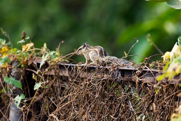 Een schattige eekhoorn in zijn natuurlijke habitat op een groene achtergrond