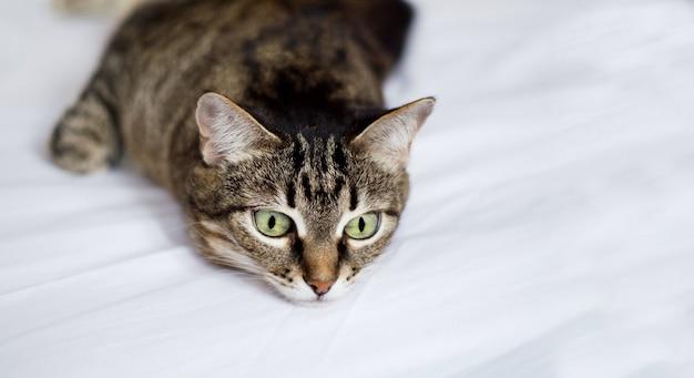 Een schattige gestreepte kat kijkt droevig en ligt op een wit bed.