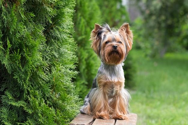 Een schattige hond zit op een bankje in de tuin
