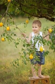 Een schattige jongen met blond haar in een wit t-shirt met zomercitroenen in de tuin onder een boom