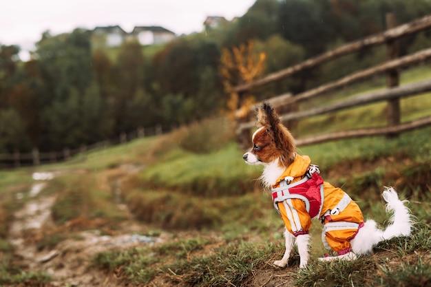 Een schattige kleine hond zit op de natte grond van het gras in de regen op een heuvel in een gele regenjas