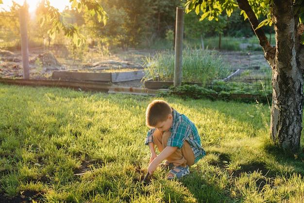 Een schattige kleine jongen plant spruiten in de tuin bij zonsondergang. tuinieren en landbouw.