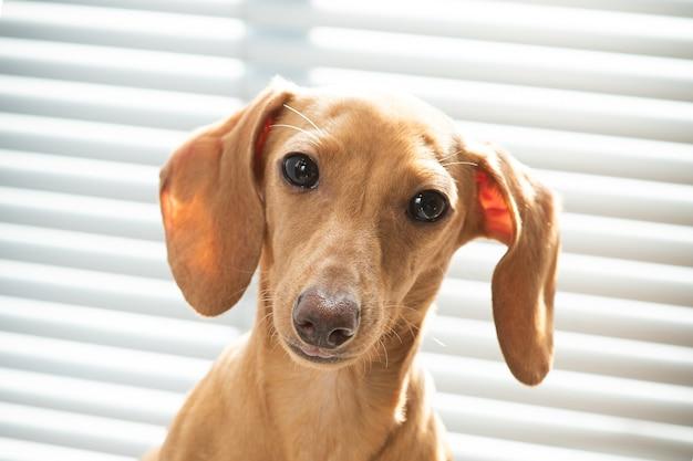 Een schattige kleine puppy kijkt ernaar uit