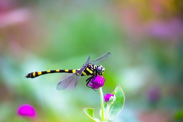 Een schattige libel die tijdens de lente op de bloemplant rust op een zachte, wazige achtergrond