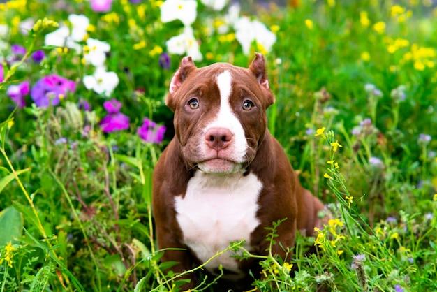 Een schattige puppy zit op het gras met bloemen op een zonnige dag tuin een grappig klein huisdier van de am...
