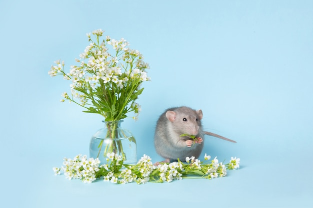 Een schattige rat naast delicate wilde bloemen op een blauwe achtergrond. schattig huisdier kerstkaart met een dier.