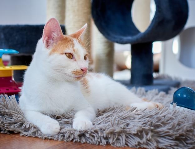 Een schattige witte en gemberkat die op een kleed in de kamer ligt