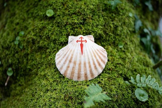 Een schelp met een geschilderd rood kruis een symbool van de camino de santiago bovenop groen mos