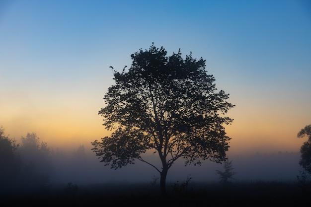 Een schilderachtig herfstlandschap, een eenzame boom tegen de achtergrond van een mistige dageraad, aan de oever van de rivier. Premium Foto
