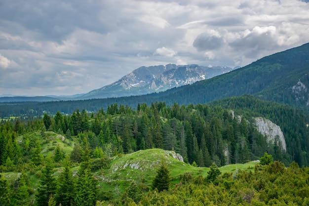 Een schilderachtige rustige weide in een bos tussen de hoge massieve bergen