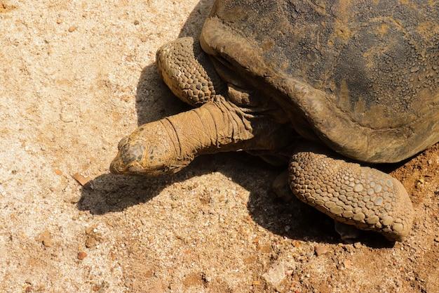 Een schildpad in een kooi uit de dierentuin