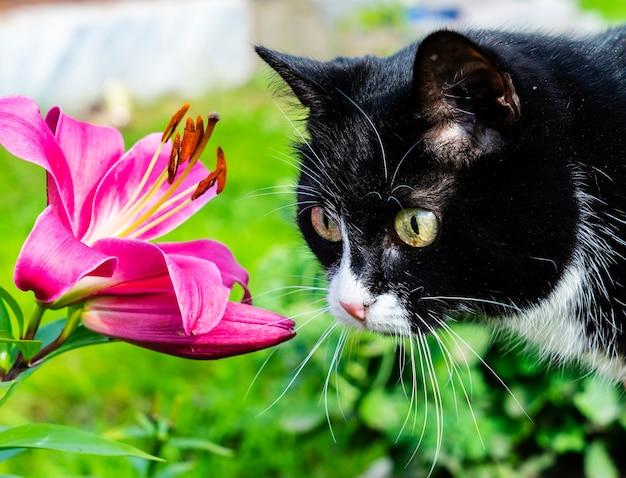 Een schitterende zwarte kat bekijkt een mooie bloem.