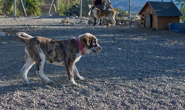 Een selectieve focus van een hond met een rode halsband op een grindige ondergrond