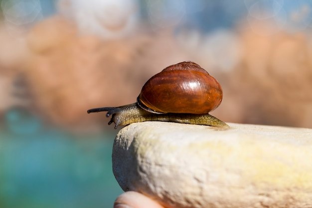Een slak