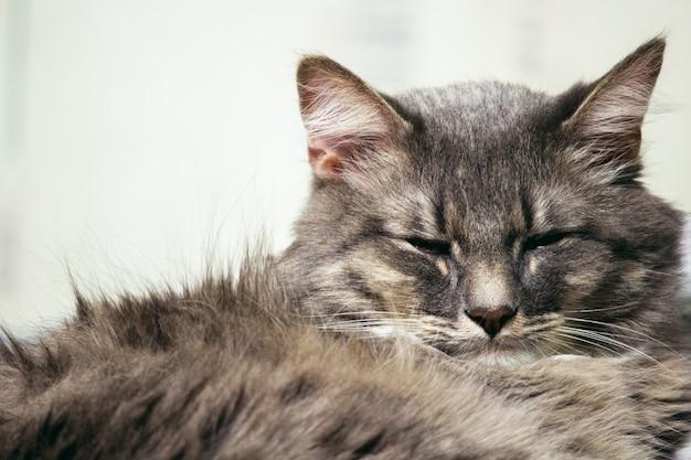 Een slapende kat geïsoleerd