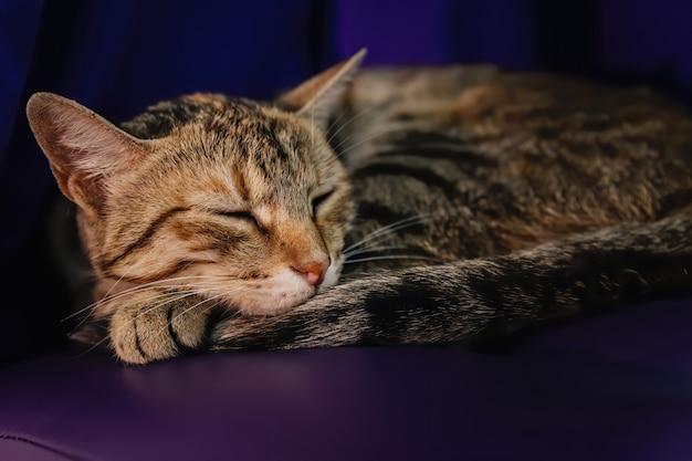 Een slapende kat op een poef in de schemering
