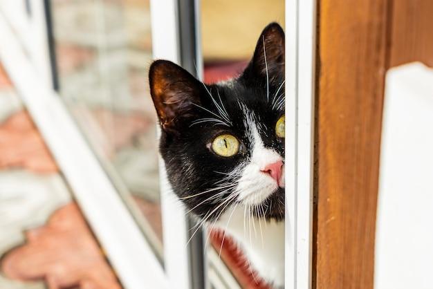 Een sluwe zwart-witte kat kijkt uit om de hoek.