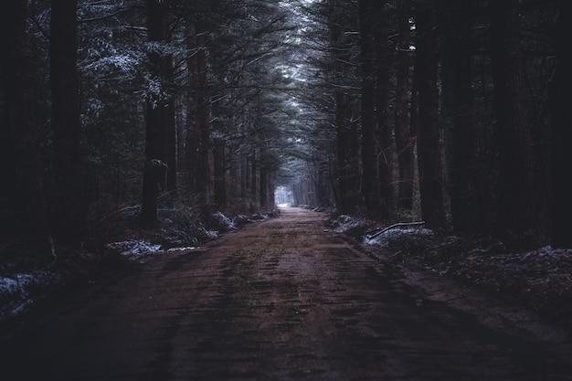 Een smalle modderige weg in een donker bos