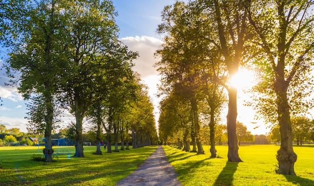 Een smalle weg omgeven door groene bomen in windsor, engeland