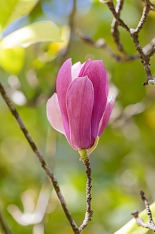 Een soort camellia, groot formaat