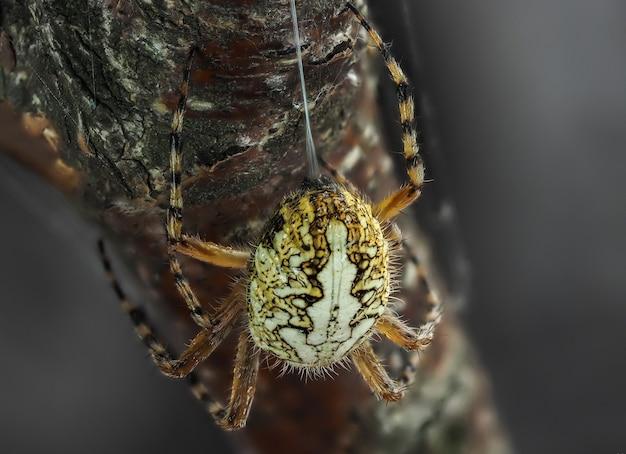 Een spin kruipt op een tak